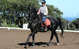 Sea Horse Ranch Services - horse training