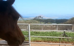 Sea Horse Ranch Services - horse boarding
