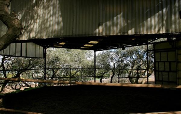 Lounge Arena