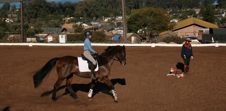 Horse Training In San Luis Obispo Sea Horse Ranch