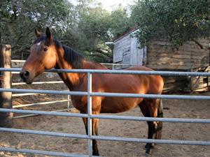 san luis obispo horse boarding