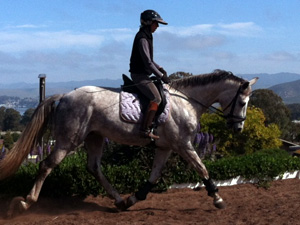 central coast horse training