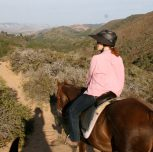 Heat Safety While Horse Riding During The Summer Months