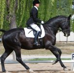Why Dressage?