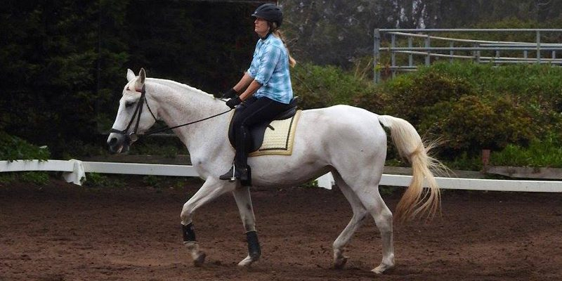 spring-equine-event-9
