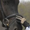 Snaffle Bridle Usage In FEI Tests
