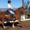 DRESSAGE BASICS IMPROVES GAITED HORSES TOO!
