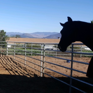 Horse Boarding In Central California