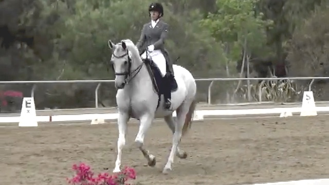 Dante Heir At Spirit Equestrian Dressage Show